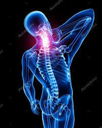 colonna vertebrale e rachide cervicale