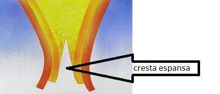 disegno di cresta espansa in espansione di cresta
