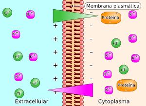 scambio di ioni attraverso la membrana cellulare