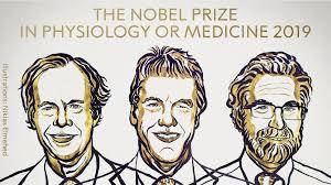 Semenza, Ratcliffe e Kaelin. Nobel per la medicina