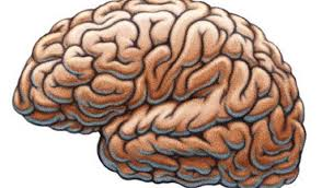 cervello e GPS